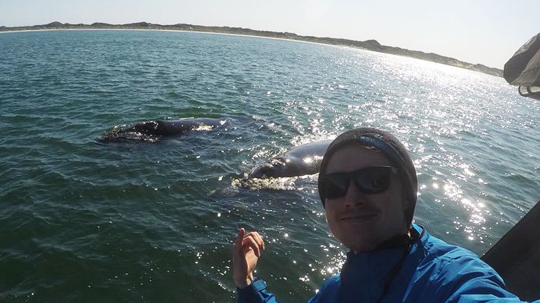 Whale Watching Cruise, 2 Hours - Busselton