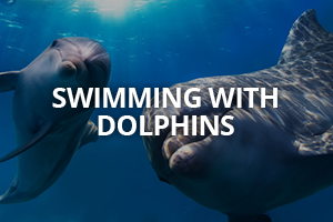cool dolphins