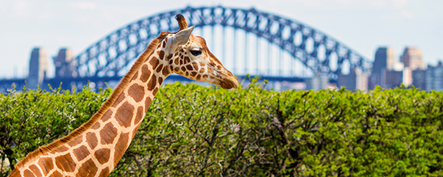 Best animal attractions and experiences in Australia