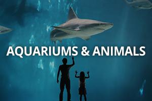 Aquariums & Animals