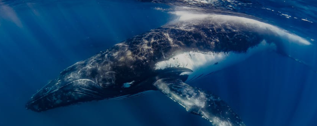 Don't miss the best whale watching tours in Australia