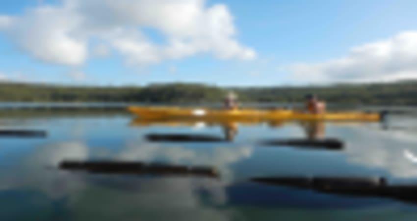 Clyde River Oyster Farm Kayaking Tour - Batemans Bay