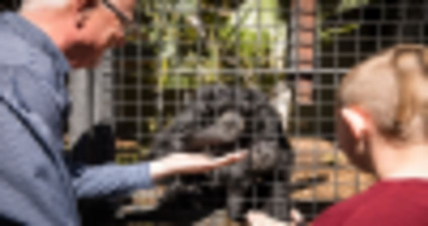 Meet the Primates Ape Encounter at Adelaide Zoo