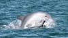 Dolphin Spotting Eco Cruise, 90 Minutes - Bunbury, WA