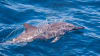 Whale Watching Cruise, 2 Hours - Exmouth