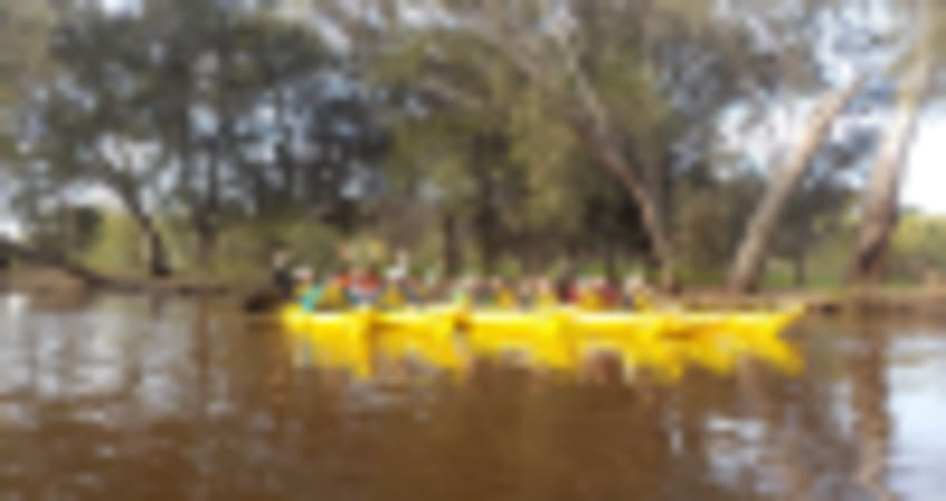 Kayak Wine Tour with Picnic Lunch For 10 - Swan River, Perth
