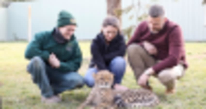 Cheetah Encounter at the National Zoo, Weekend - Canberra
