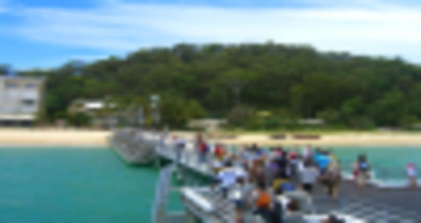 Moreton Island Fun Day with Dolphin Feeding - Brisbane