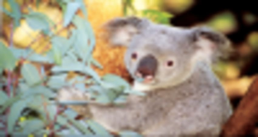 Perth Zoo Entry and Scenic Cruise