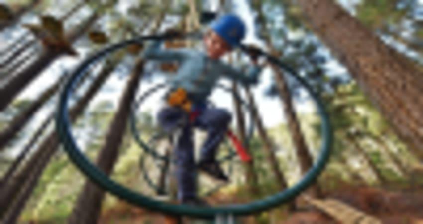 Tree Top Ropes Course, 2 Hours - Launceston, TAS