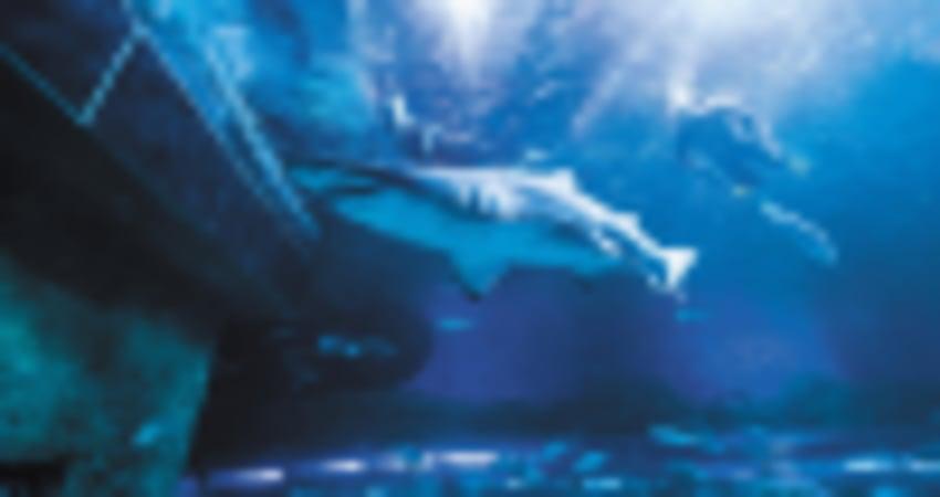 Snorkel with Sharks at The Aquarium of Western Australia - Perth