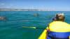 Rainbow Beach Wildlife Kayak Tour and 4WD Adventure - Half Day Tour