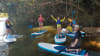 Stand Up Paddle Board Tour, 3 Hours - Kuranda Rainforest, Cairns