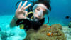 Introductory Shark Dive Tour, 1 Night - Great Barrier Reef, Departing Cairns