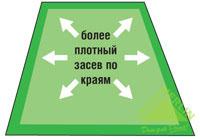 Как посадить газон самостоятельно