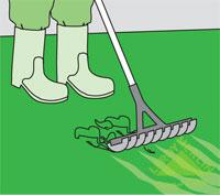 Удаление мха с газона