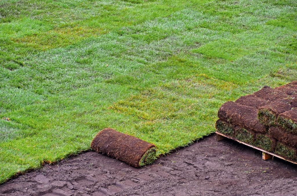 выбор семян для газона