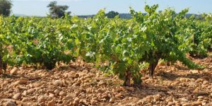 A Useful Guide to Natural Wine