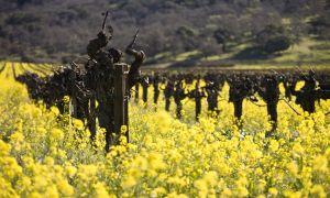 A Useful Guide to Organic Wine