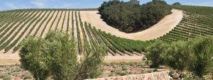 California Wine Clubs