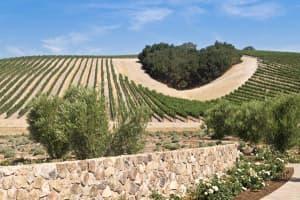 Best Wine California Clubs