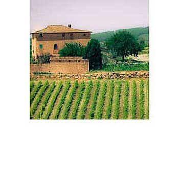 Italian Stallions Wine Club