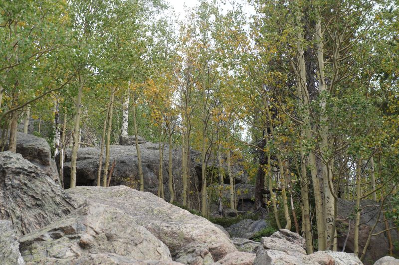 aspen near Bear Lake showing some yellow, but mostly green