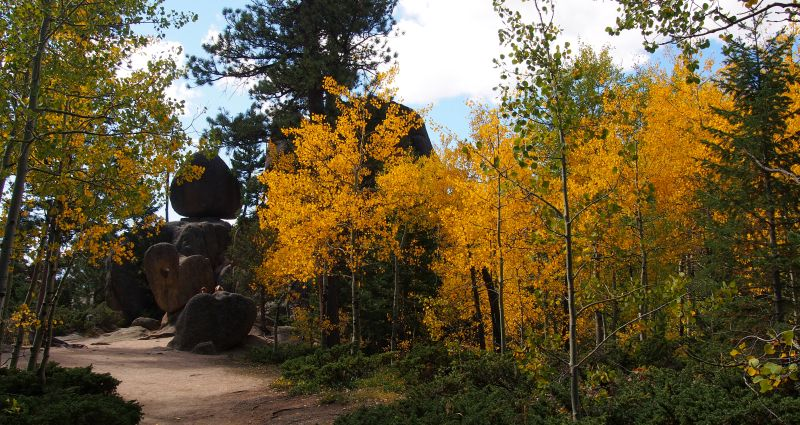 The aspen along the Gem Lake Trail are mostly found in the understory.