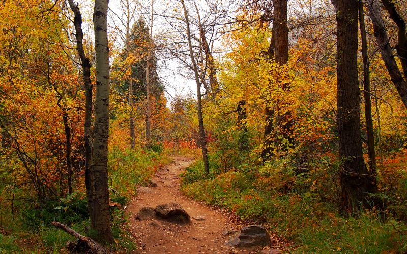 The Fern Lake trail in Rocky Mountain National Park has a great variety of color this fall.