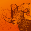 Illustration of bighorn sheep
