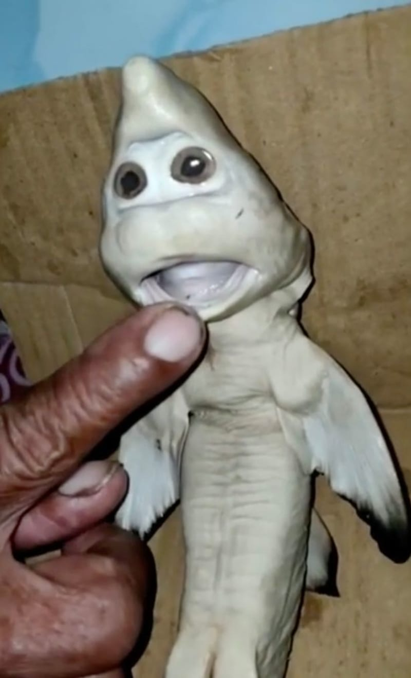 Indonesian Fisherman Stunned To Find Mutant Baby Shark With 'Human Face'
