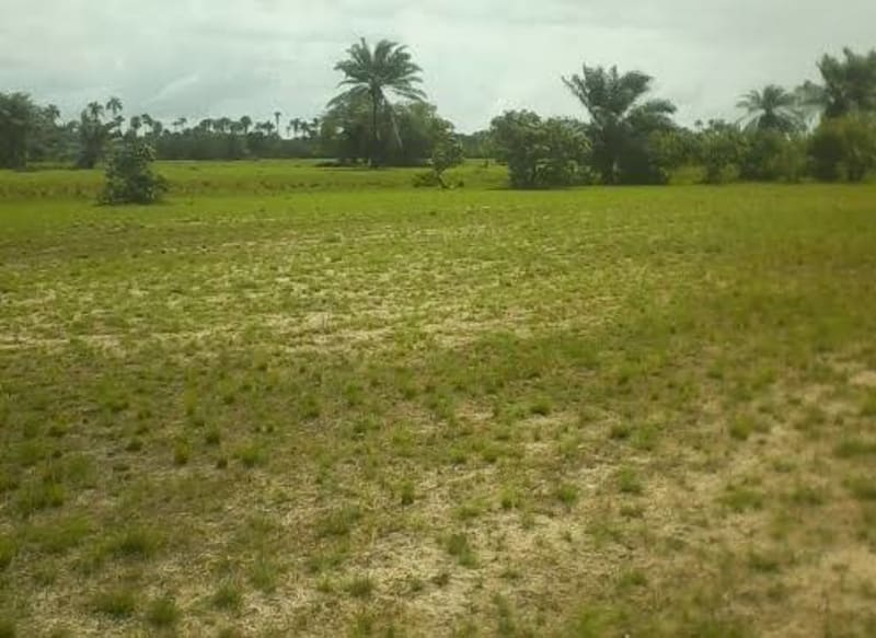 Systems Of Land Tenure In Nigeria