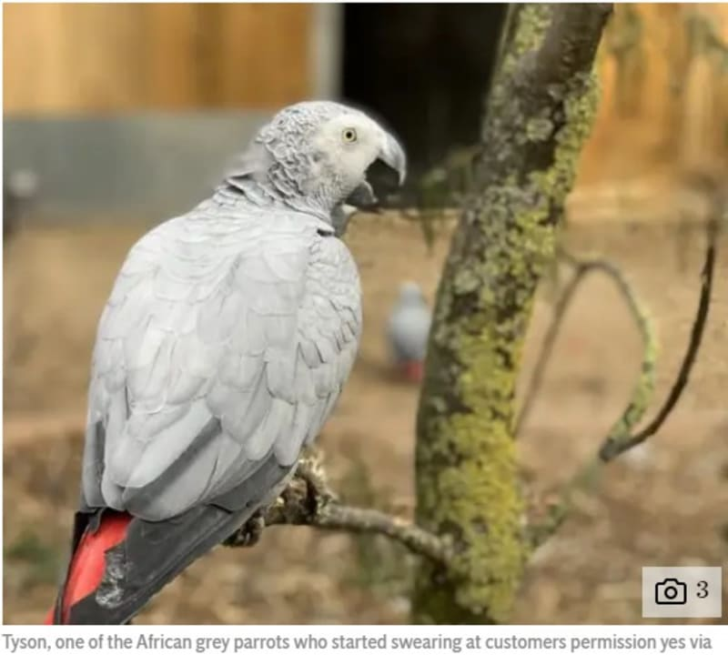 Five Parrots Removed From Public View For Swearing At Visitors In UK