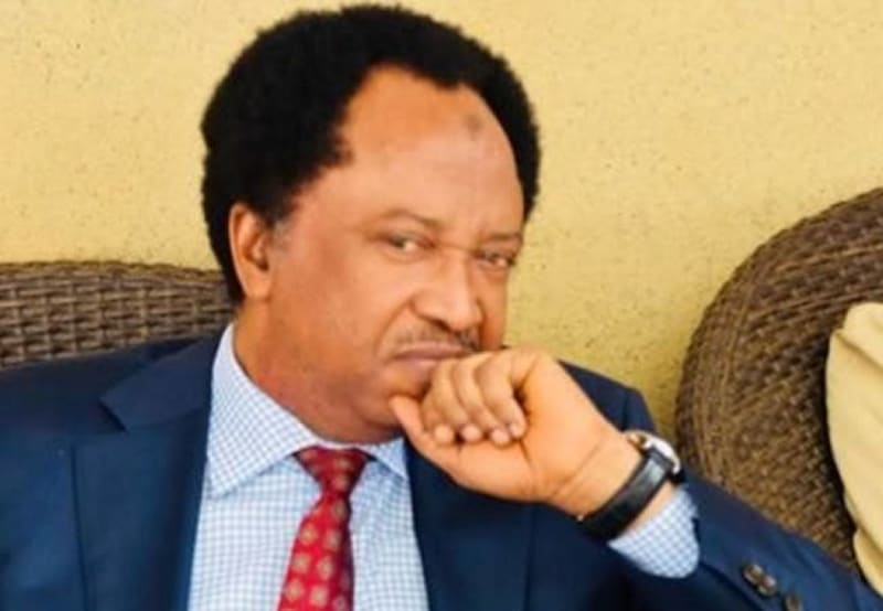 'You Taught PDP How To Politicize Insecurity' - Shehu Sani Replies Presidency