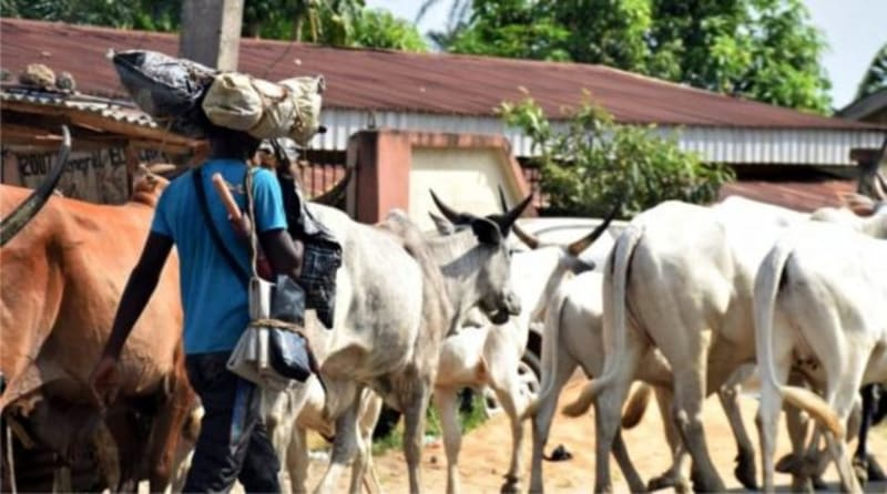 Herdsmen Receive Military Training In Ekiti – Council Of Elders