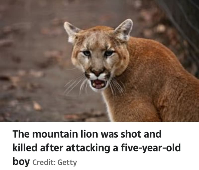 California: Hero Mom Punches, Fights Off Mountain Lion After It Attacked Her Son