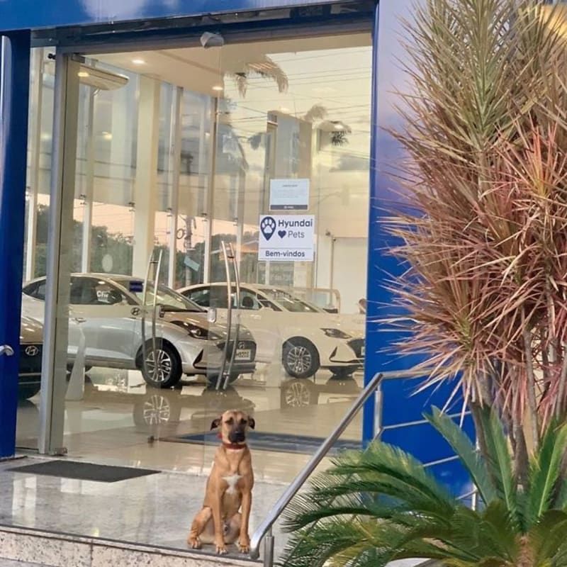 Hyundai Dealership Employs Dog As Sales Person With I.D & Desk