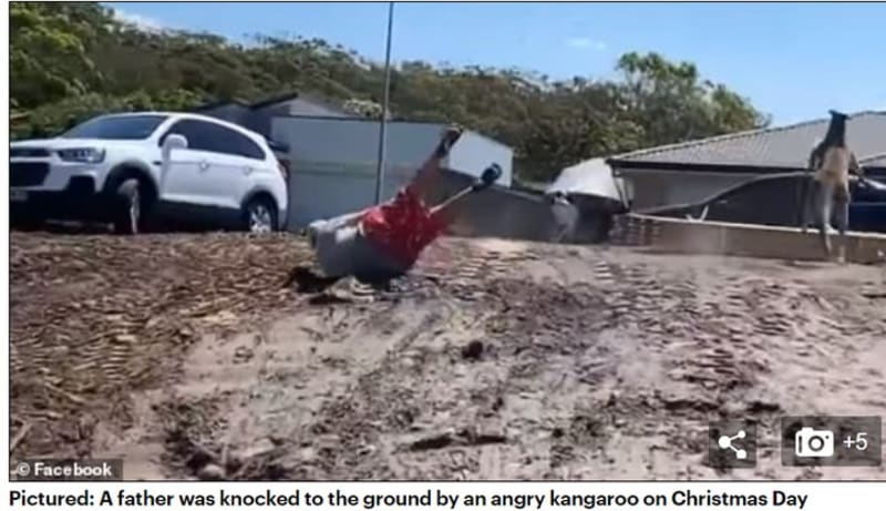 Shocking Moment Huge Kangaroo Punched An Australian Man To The Ground (Video)