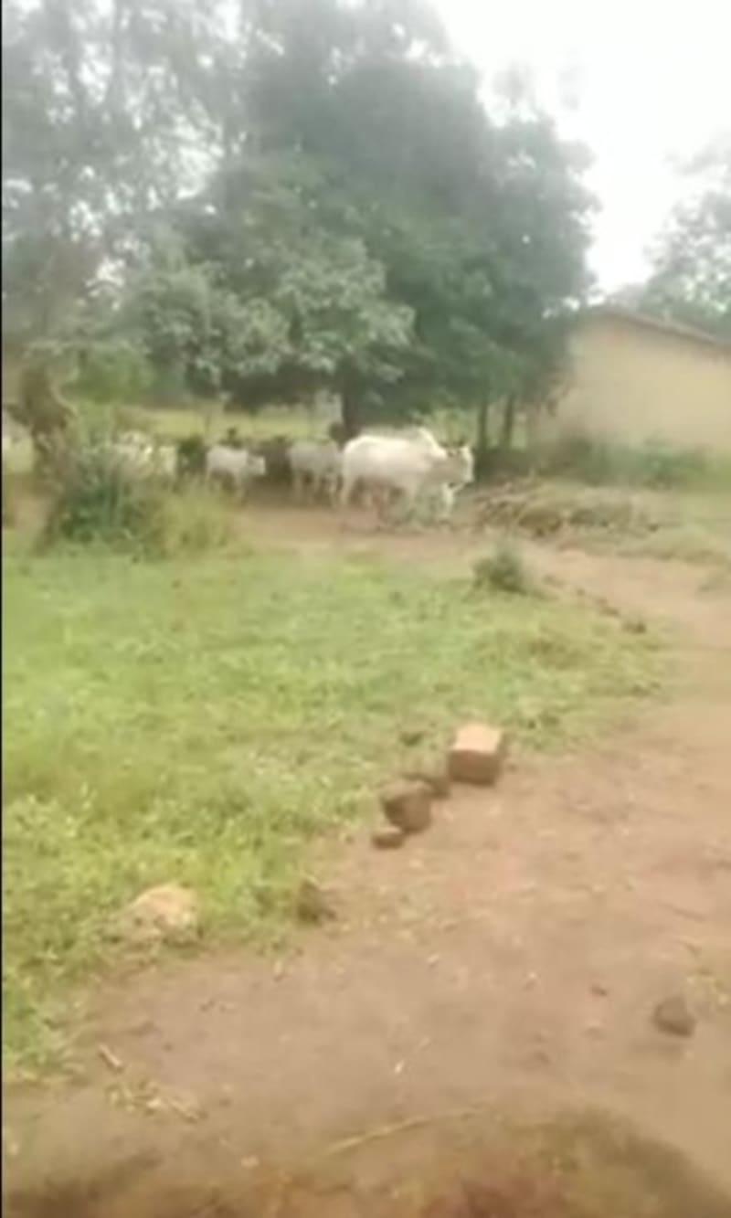 Teachers, Pupils Run As Fulani Herdsmen Invade School In Isuikwuato, Abia