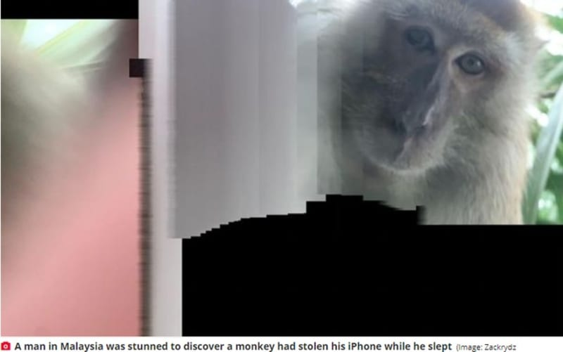 Malaysian Monkey Steals Man's Iphone, Takes Selfies & Dumps It In The Jungle