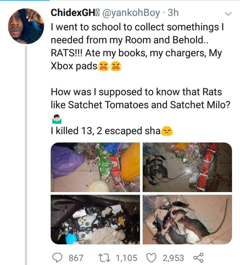 Rats Destroy ABSU Student's Property During Lockdown