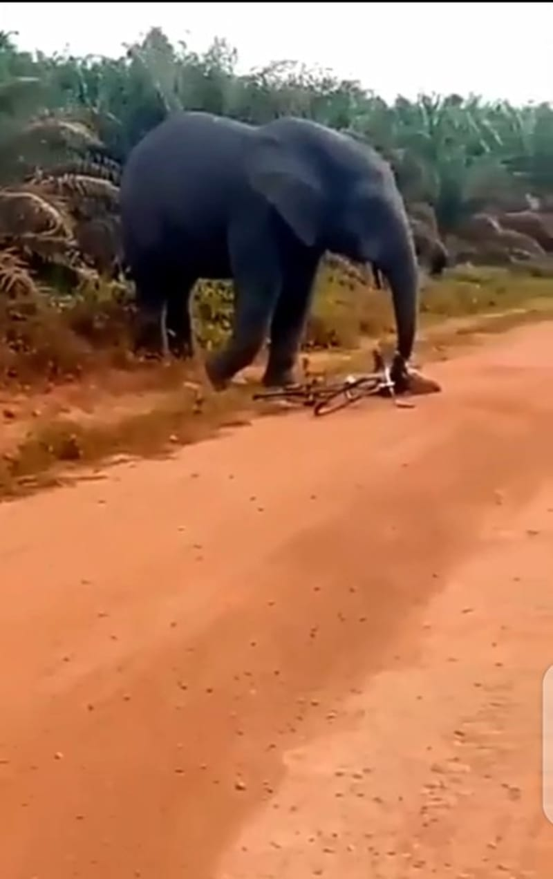 Elephant Attacks Man, Seizes His Bicycle  (Video)