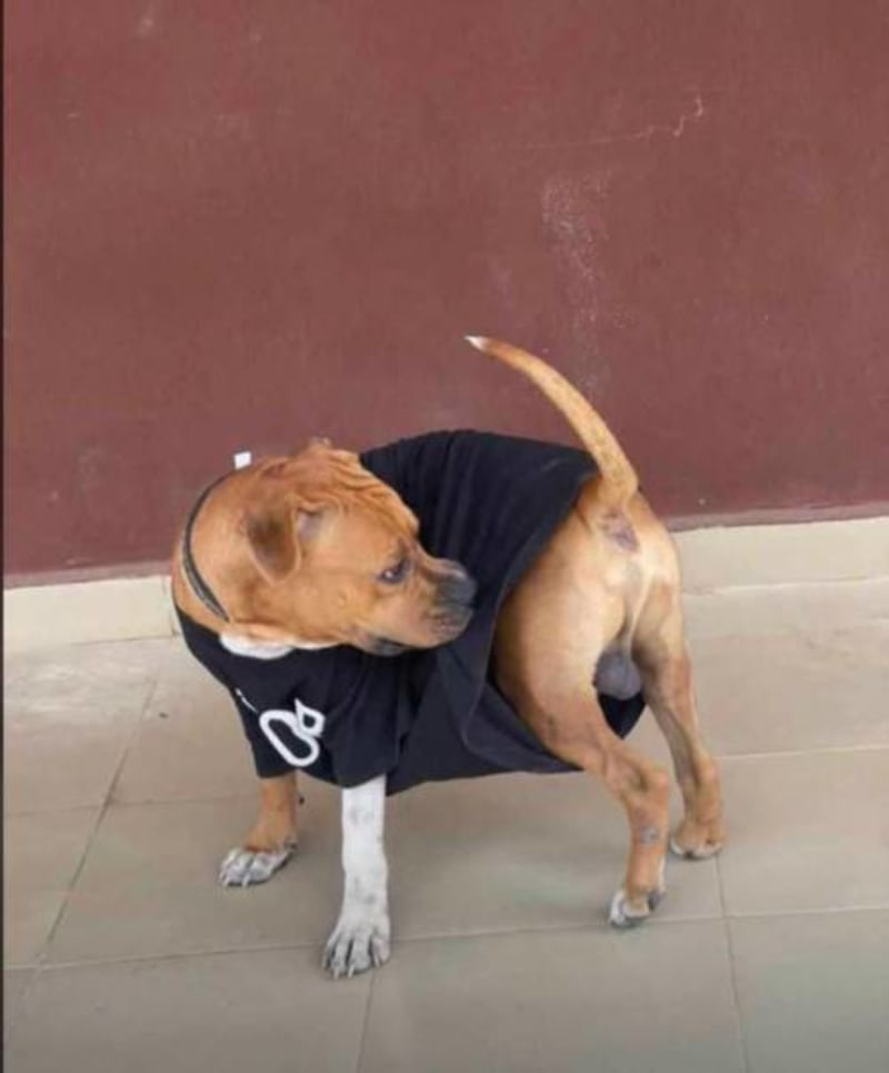 Ondo Police Arrest Dog For Biting AAUA Student's Private Parts