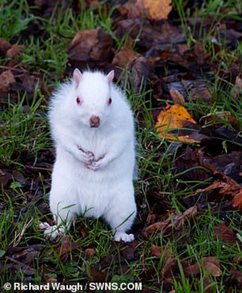 Man Finds Rare Albino Squirrel Posing For Pictures Outside His Home In UK