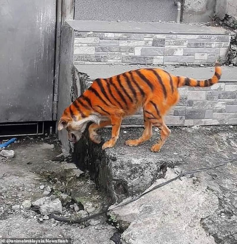 Police Searching For Man Who Painted Dog Like Tiger To Scare Locals In Malaysia