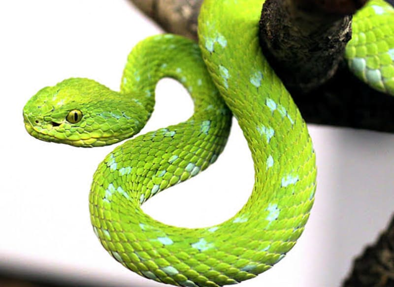 13 Most Beautiful Snakes In The World: Facts And Pictures