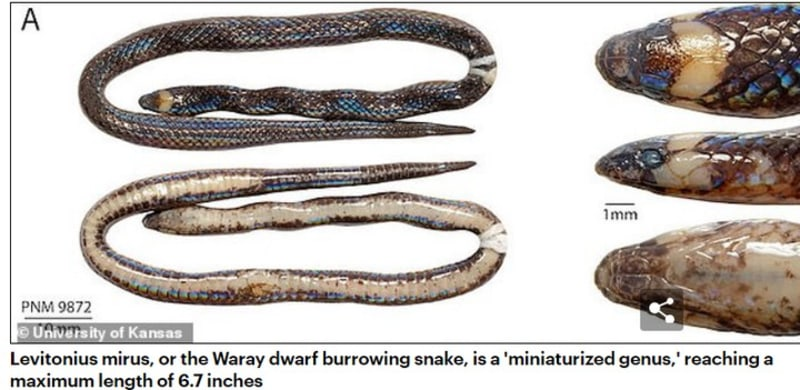 Scientists Discover Pencil-Sized Species Of Snake, Hiding In Plain Sight
