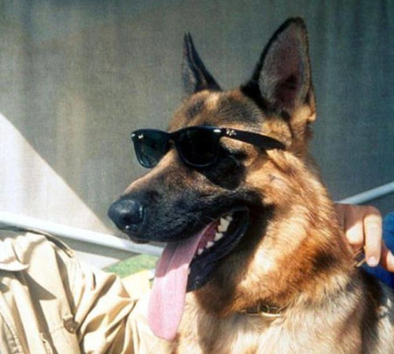 The Gunthers: The Incredible Story Of The World's Richest Dog Dynasty