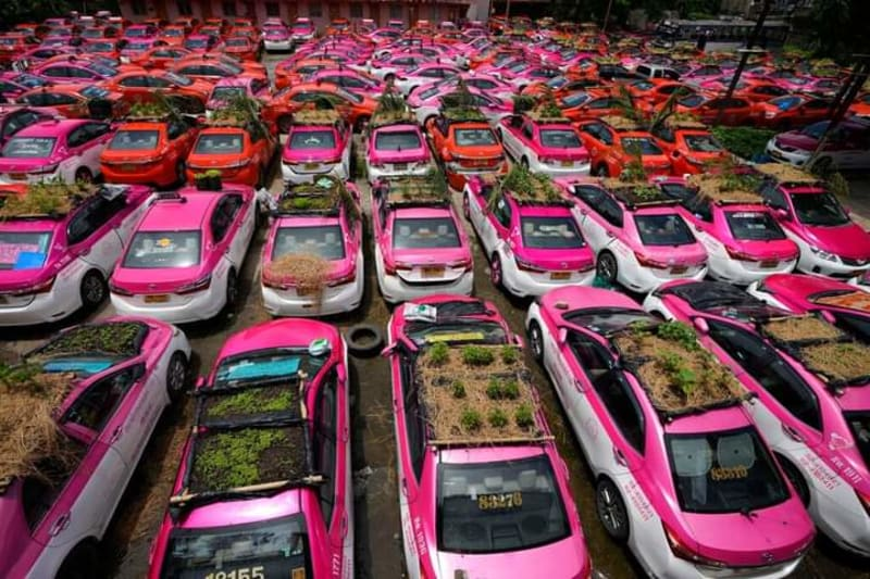 COVID-19: Hundreds Of Exotic Taxis Turned To Vegetable Farm In Thailand