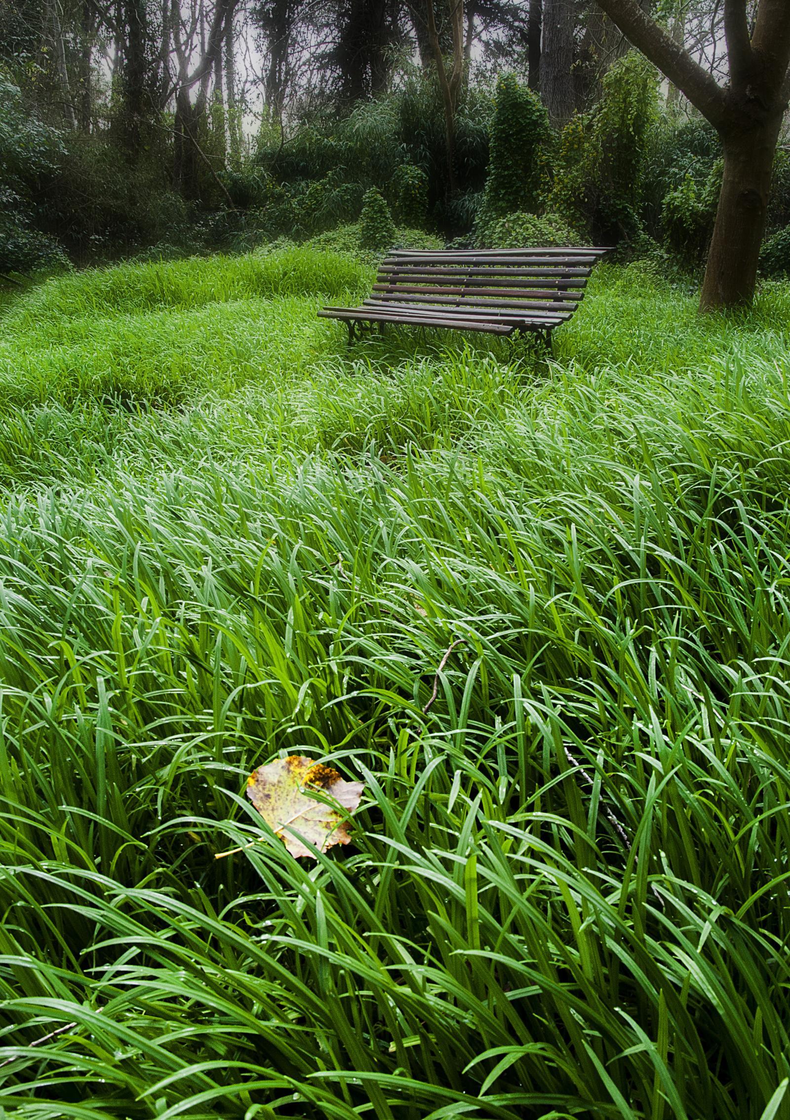 soledad en el bosque